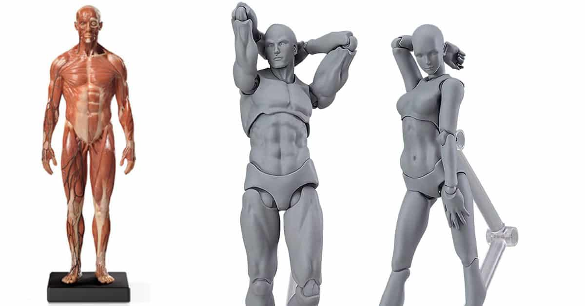 best_anatomy_figure_models_feature_image